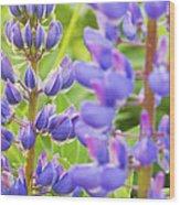 Wild Lupine Flowers Wood Print