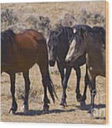 Wild Mares-signed-#0271 Wood Print