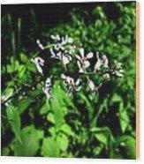 Wild Missouri Flowers Wood Print