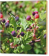Wild Mountain Berries Wood Print