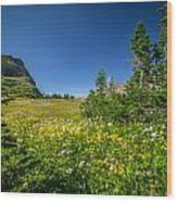 Wild Mountain Flowers Glacier National Park   Wood Print