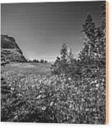 Wild Mountain Flowers Glacier National Park Wood Print by Rich Franco
