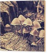 Wild Mushrooms Wood Print by Amanda Elwell