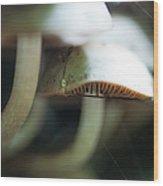 Wild Mushrooms Wood Print