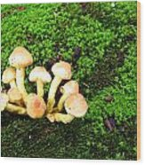 Wild Mushrooms Wood Print