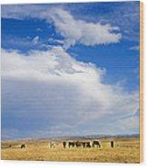 Wild Mustang Herd Grazing Wood Print