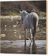 Wild Mustang On The River  Wood Print