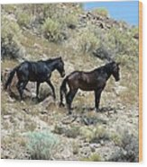 Wild Mustang Pair From Applewhite Hma Wood Print