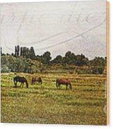 Wild Mustangs Carpe Diem Wood Print