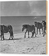 Wild Mustangs Of Shackleford Wood Print