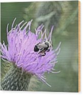 Wild Nectar Wood Print