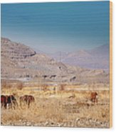 Wild Nevada Mustang Herd Wood Print