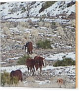 Wild Nevada Mustangs 2 Wood Print