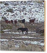 Wild Nevada Mustangs Wood Print