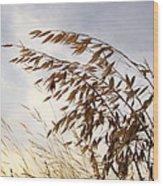 Wild Oats 2am-110432 Wood Print