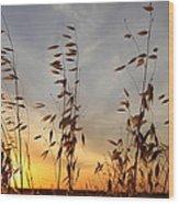 Wild Oats 2am-110425 Wood Print