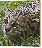 Wild Ocelot Wood Print
