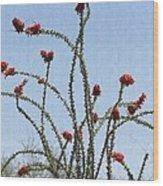 Wild Ocotillo In Bloom Wood Print