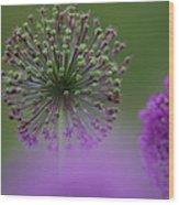 Wild Onion Wood Print