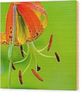 Wild Orange Lilies Wood Print