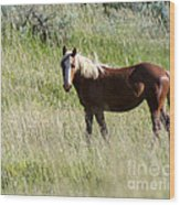 Wild Palomino Wood Print by Sabrina L Ryan