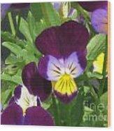 Wild Pansies Or Johnny Jump-ups 1 Wood Print