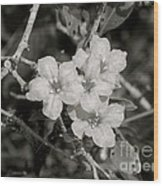 Wild Petunias In Black And White Wood Print
