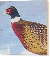 Wild Pheasant Wood Print