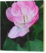 Wild Pink Rose Wood Print