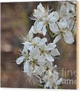 Wild Plum Blooms Wood Print