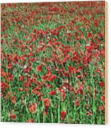 Wild Poppies Growing In A Field, South Wood Print