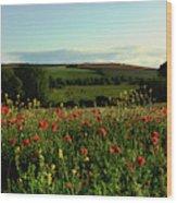Wild Poppies Growing In A Field, Wylye Wood Print