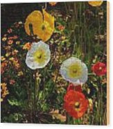 Wild Poppies Wood Print by Helen Carson