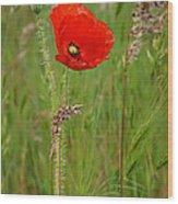 Wild Poppy Wood Print