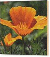 Wild Poppy On The Loose Wood Print