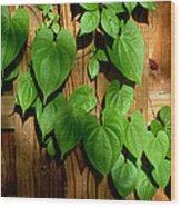 Wild Potato Vine 2 Wood Print