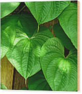 Wild Potato Vine Wood Print