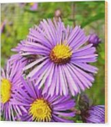 Wild Purple Asters Wood Print