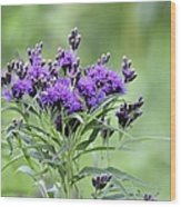 Wild Purple Wood Print