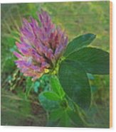 Wild Red Clover Blossom Wood Print