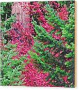 Wild Red Maple Wood Print