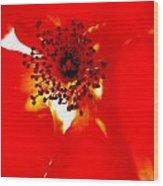 Wild  Red Rose Extrem Macro Wood Print