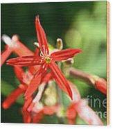 Wild Red Wood Print