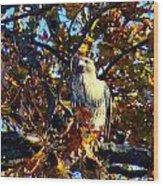 Wild Red Tail Hawk Wood Print