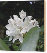 Wild Rhododendron Blossom Wood Print