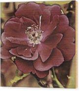 Wild Rose Iv Wood Print