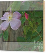 Wild Rose Out Of Bounds 1 Wood Print