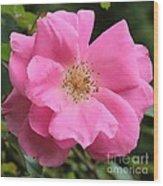Wild Rose Square Wood Print