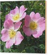 Wild Roses 1 Wood Print
