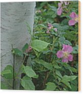 Wild Roses With Birch Tree Wood Print